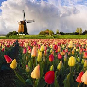 Holandia: Eindhoven już od 68 PLN